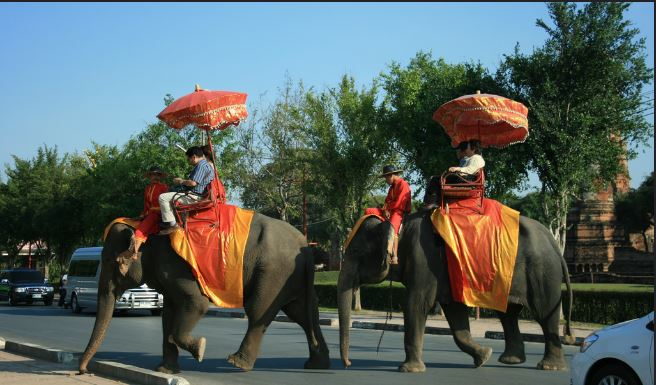 Thailand's famous two elephant back riding with tourist onboard