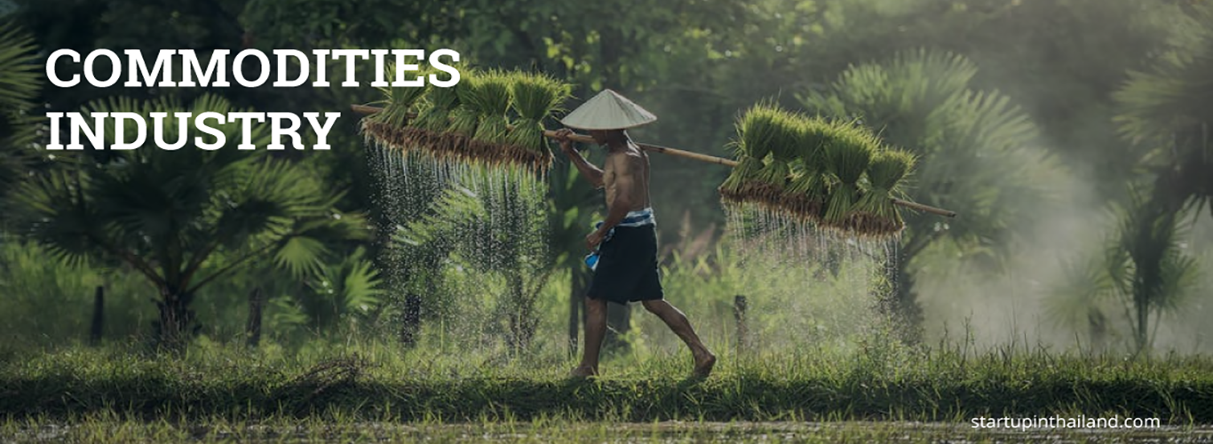 A Thai farmer carrying rice plant seedlings on a makeshift bamboo rod walking on the rice fields
