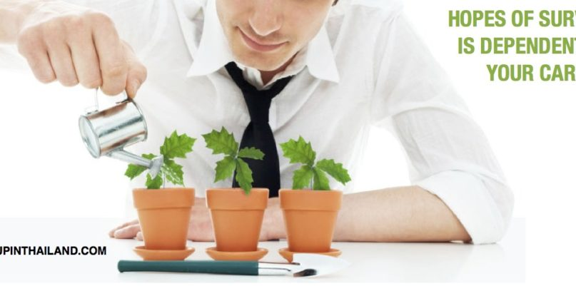 A man wearing a white longsleeves holding a miniature watering pot pouring water on three plants on a pot with caption